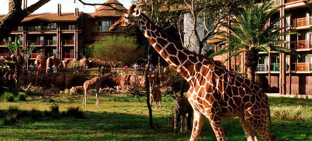 Animal Kingdom Hotel Disney World Orlando Florida